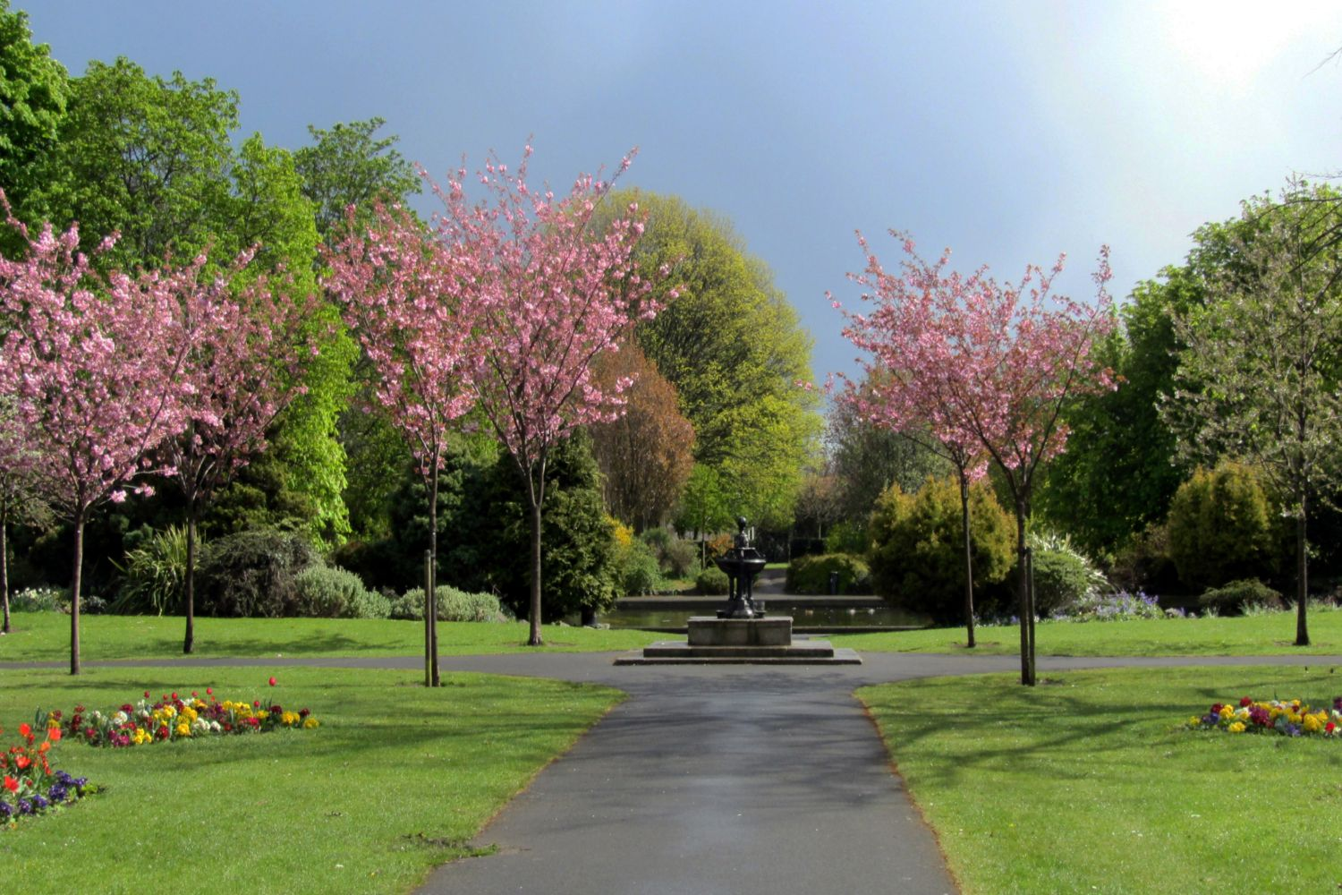 pink blossom in Herbert Park (a)
